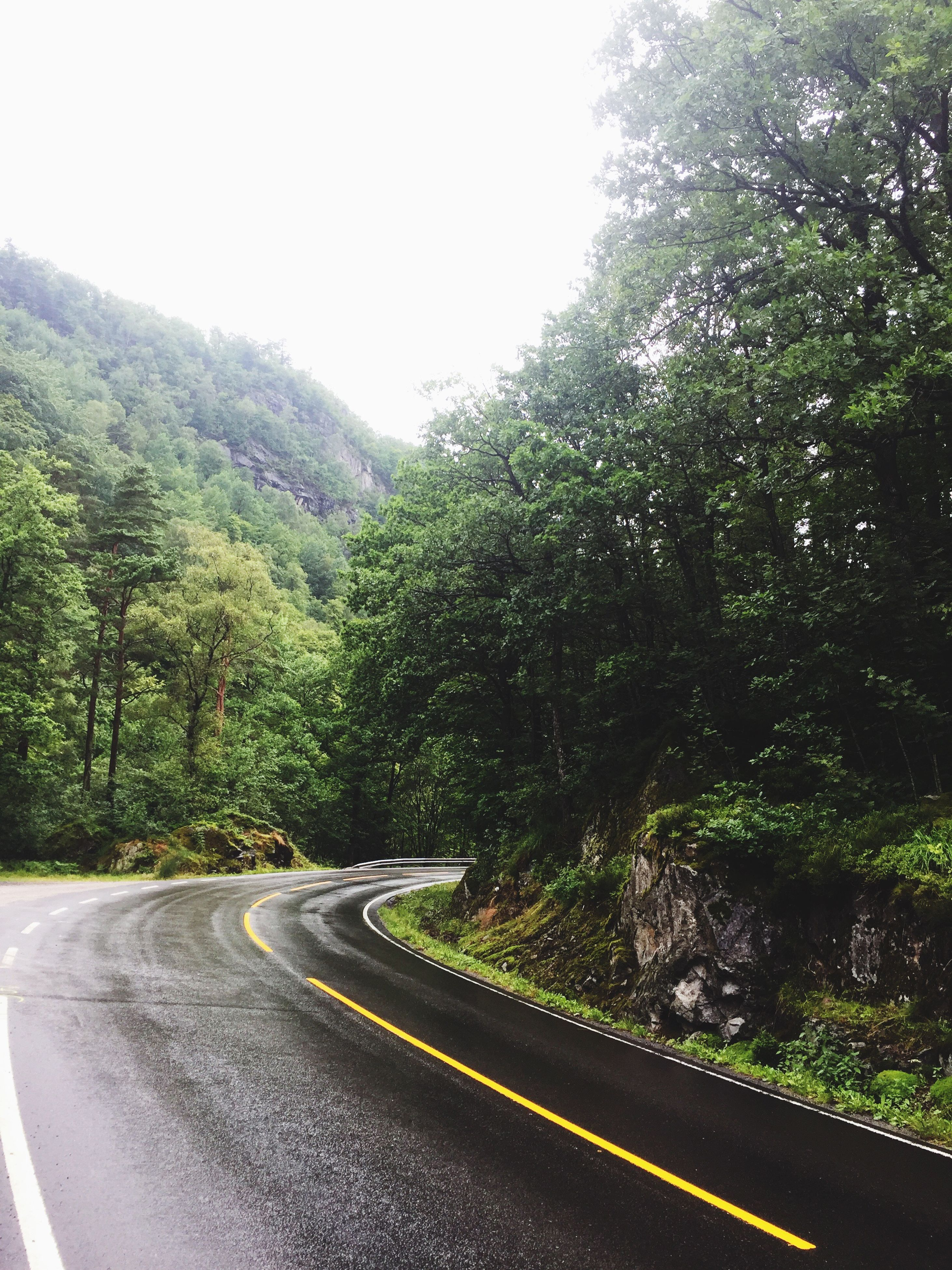 road, tree, transportation, the way forward, nature, no people, day, curve, winding road, mountain, tranquility, outdoors, clear sky, growth, scenics, forest, beauty in nature, landscape, sky