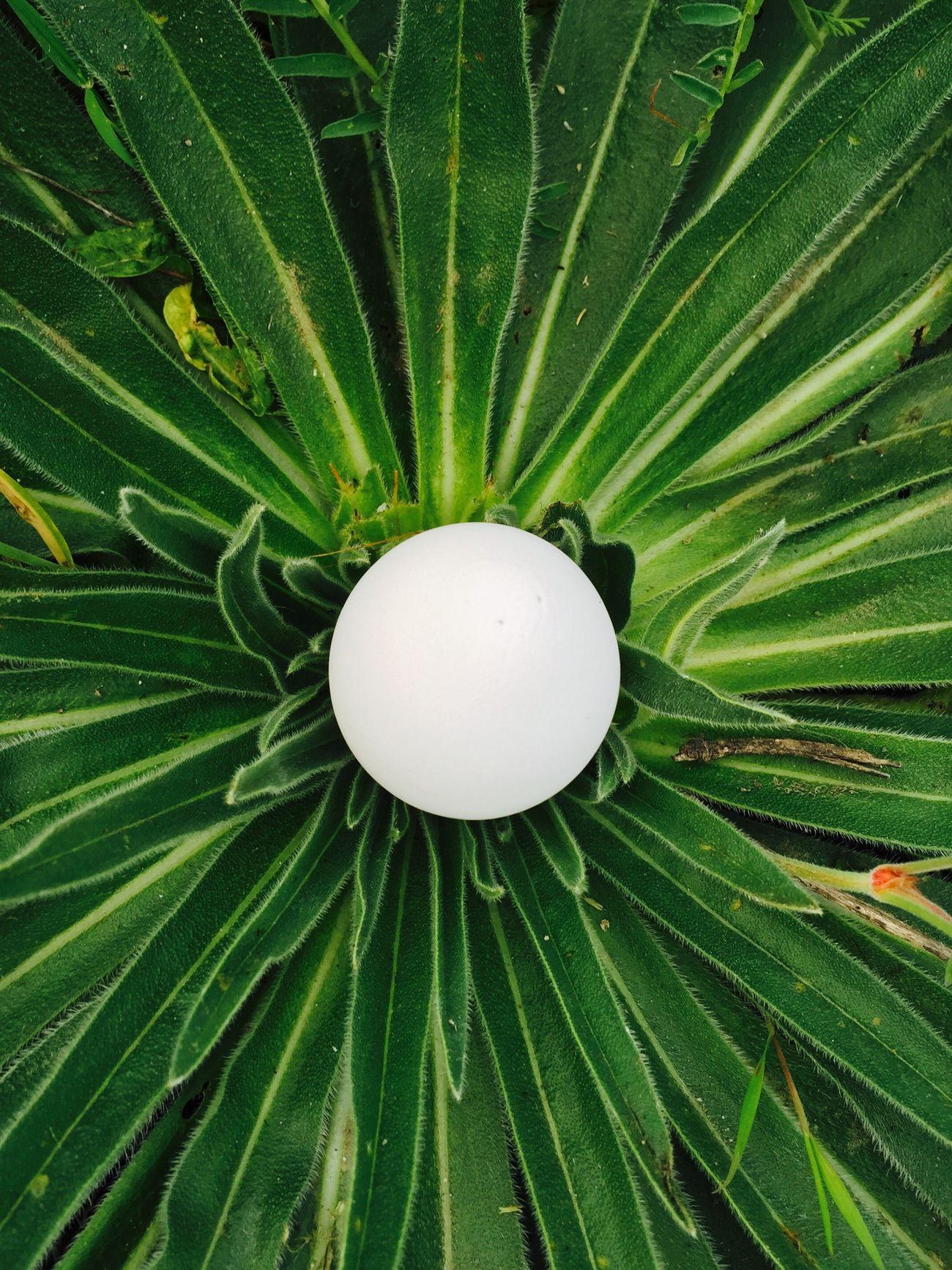 Tavuğun sanatı 🐣🐣 Egg Chicken Animals