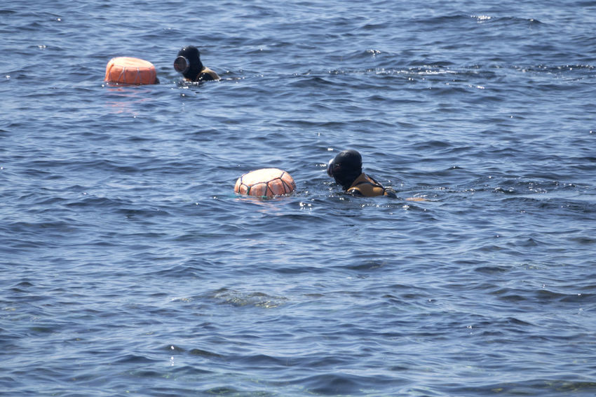 Haenyeos who are female divers picking up sea food in sea. Diving JEJU ISLAND  Animal Themes Animal Wildlife Animals In The Wild Beauty In Nature Bird Day Female Diver Haenyeo Nature No People Outdoors Sea Swimming Water Waterfront