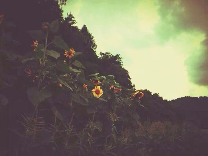Sunflower Sky EyeEm Best Shots Storm