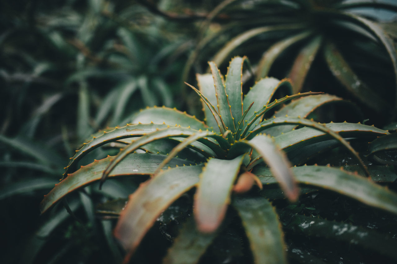 Green Plant Succulents