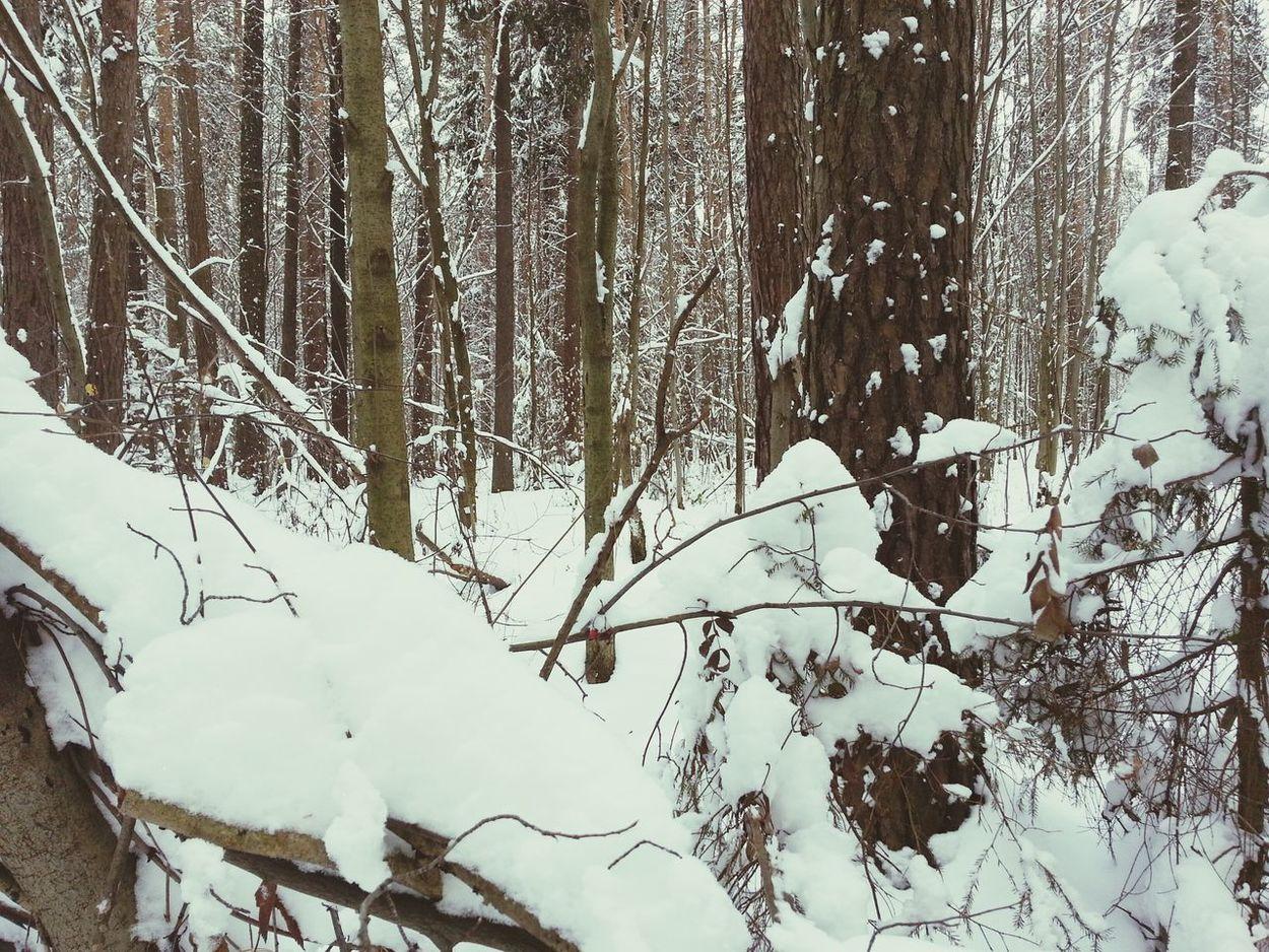 Russia Russianwinter Winterforest Perm