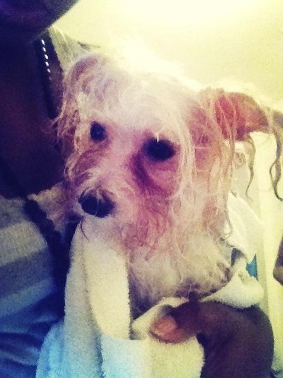 He Jus Gt A Bath