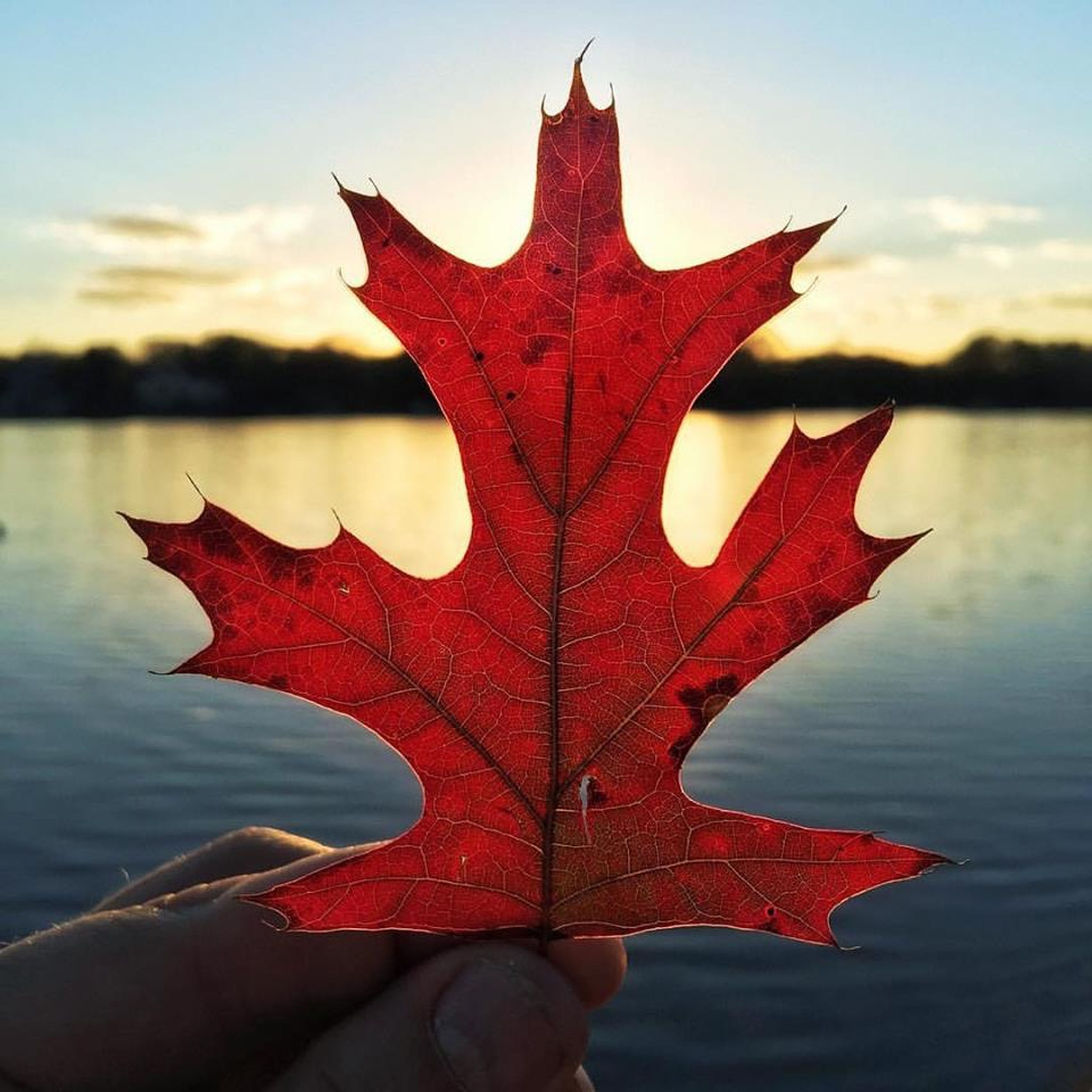 person, focus on foreground, part of, close-up, water, red, sky, unrecognizable person, star shape, holding, cropped, human finger, leisure activity, personal perspective, outdoors, orange color, nature