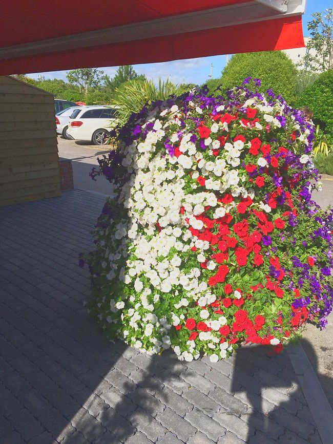 London Lifestyle Flower Growth Nature Plant Freshness Built Structure Architecture Outdoors Day Building Exterior Vertical No People Beauty In Nature Window Box Fragility Flower Head Capturing Motion Sussex Coast Sussex Butlins Bognor Regis