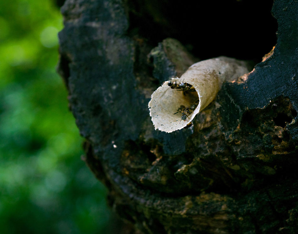 Malaysian bee hive. Animal Themes Beauty In Nature Bees Close-up Day Growth Hive Malaysia Malaysian Bees Mushroom Nature No People Outdoors Textured  Tree Tree Trunk