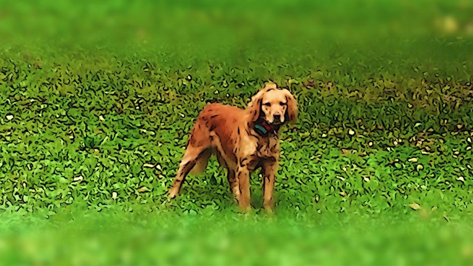 Chien chien sur mon chemin 😊👍🙏😚 Dog Chien Balade Sur Les Chemins Sur Mon Chemin Chien De Chasse