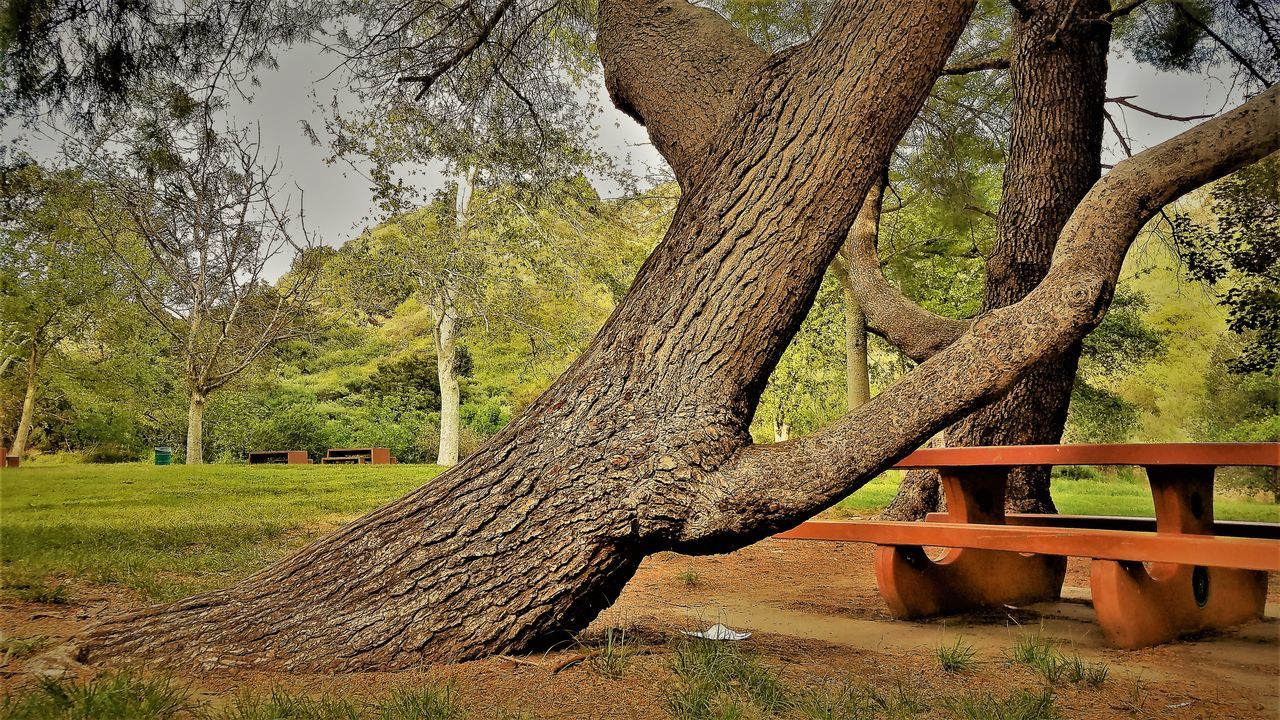 Beauty In Nature Branch Day Grass If Trees Could Speak Landscape Nature No People Outdoors Park Seat Table Tree Tree Trunk