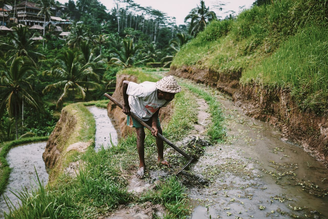 Man Working Rice Field Working Hard Rice Paddy Rice Terraces Work The Press - Work Green Tropical People Travel Photography Traveling Travel Bali