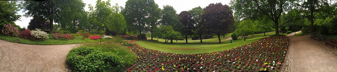 Panorama of Wuppertal Park called Hardt // Nature Nature_collection EyeEm Nature Lover Flowers Spring Spring Flowers