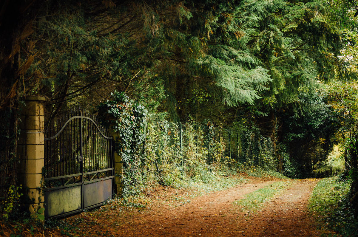 Abandoned Beauty In Nature Closed Day Entrance Forest Gate Leaf Nature No People Old Outdoors Path Plant Plot Private Property Road Tree Way