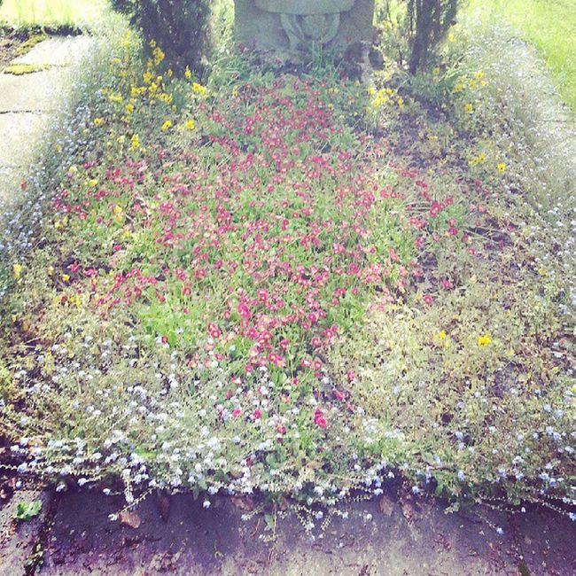 Grabbepflanzung Vorher