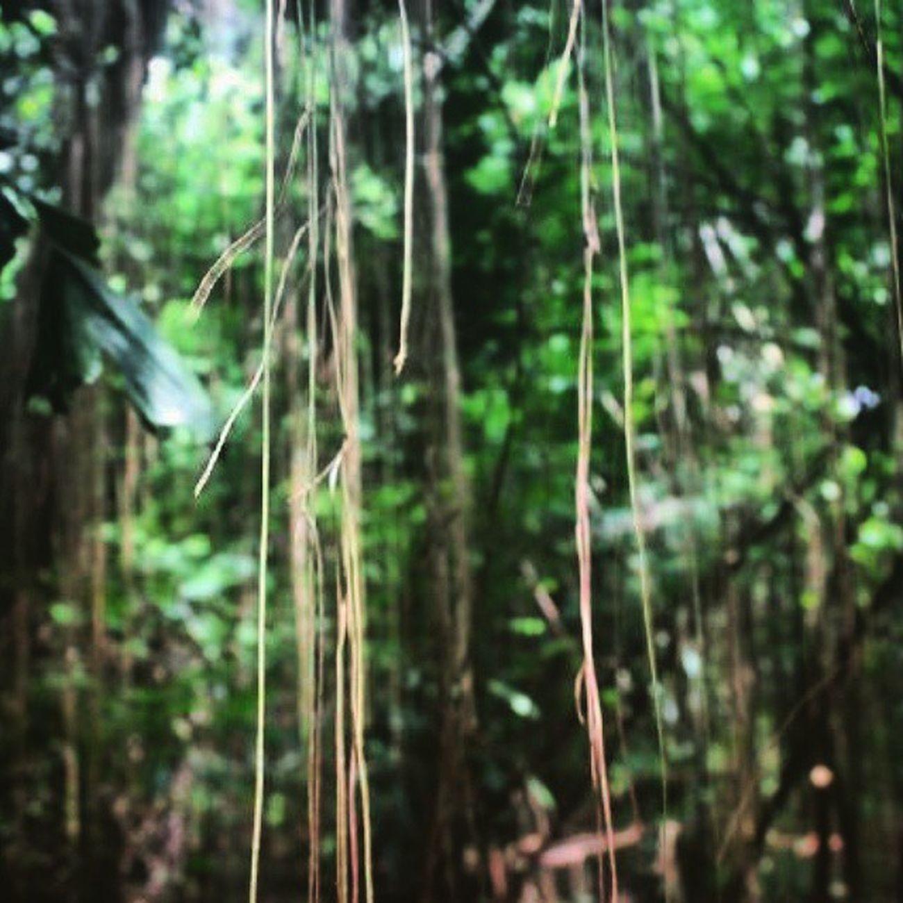 Nature Baksil Hutankota Nongkinongki x))