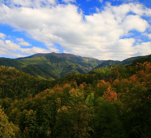 Autumn Colors Perspectives On Nature Beauty In Nature Cloud - Sky Day Forest Growth Landscape Mountain Mountain Range Nature No People Outdoors Range Scenery Scenics Sky Tranquil Scene Transylvania💕 Tree Vegetation