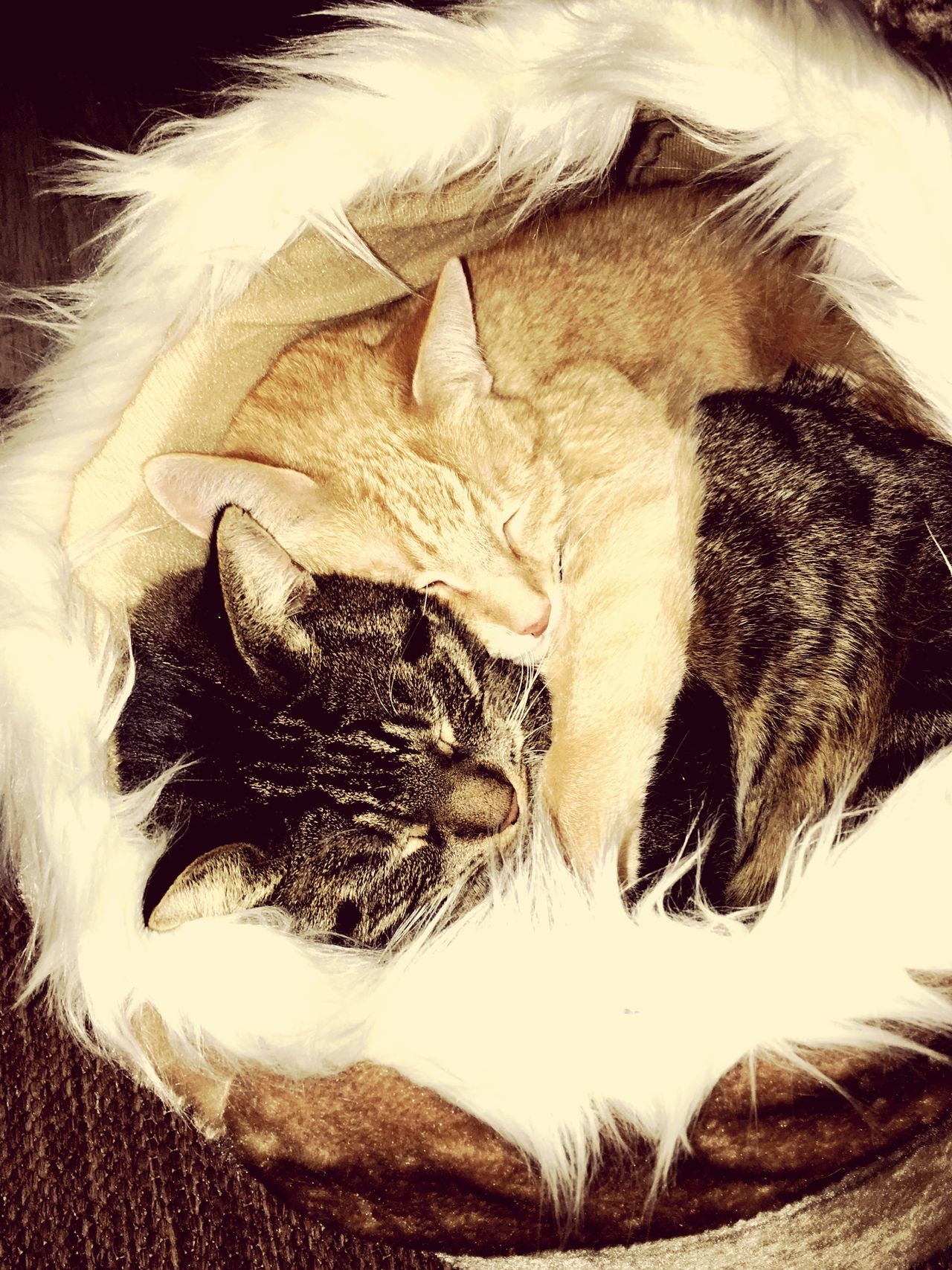Domestic Cat Hugs & Love  EyeEm Diversity The Secret Spaces