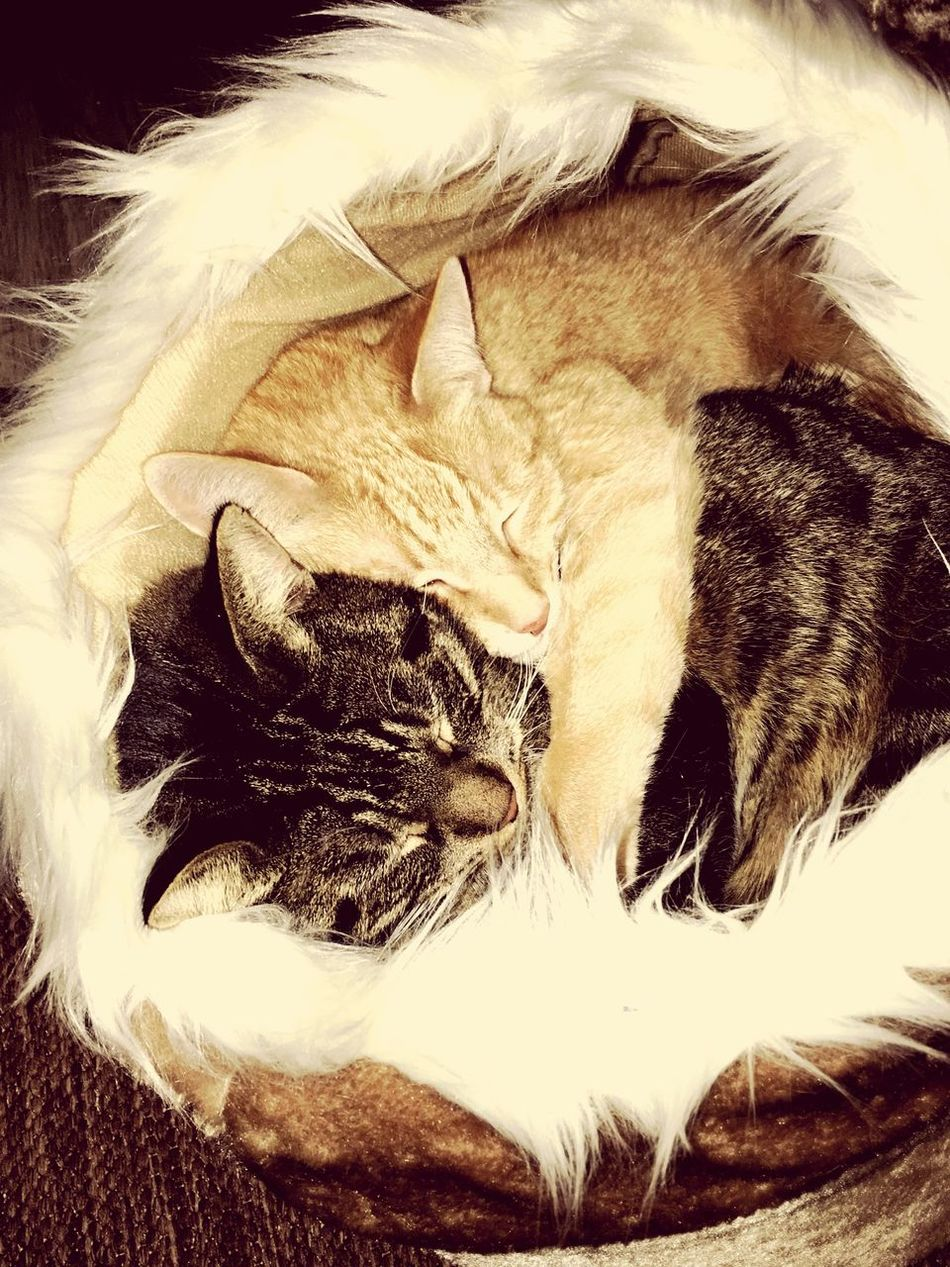 Domestic Cat Hugs & Love  EyeEm Diversity The Secret Spaces