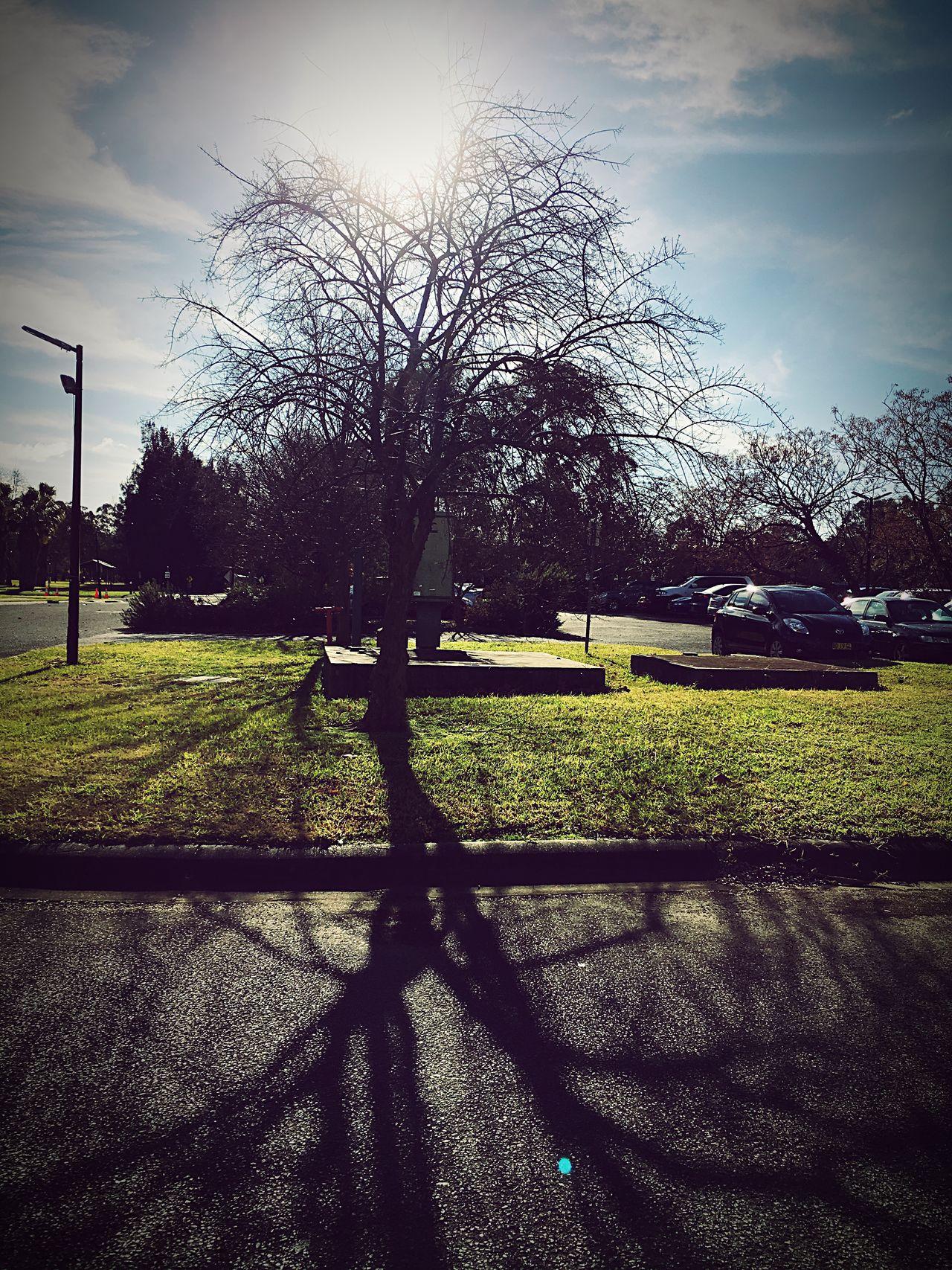 Tree Of Life?  Richmond College