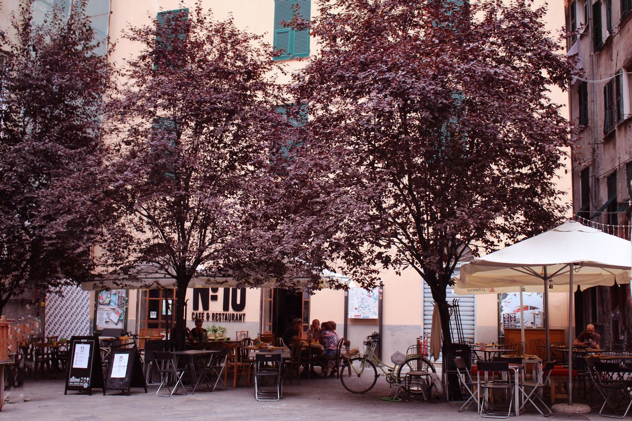 Architecture Branch Building Exterior Built Structure Cafe Chair City Day Flower Genova Nature No People Outdoor Cafe Outdoors Restaurant Sidewalk Cafe Sky Table Tree Vintage Photo Zena