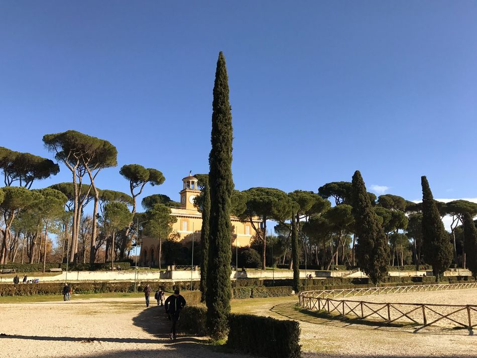 Park Rome Villa Borghese Park Tree Clear Sky Growth Palm Tree Sunlight Nature Outdoors No People Beauty In Nature Day Scenics Sky