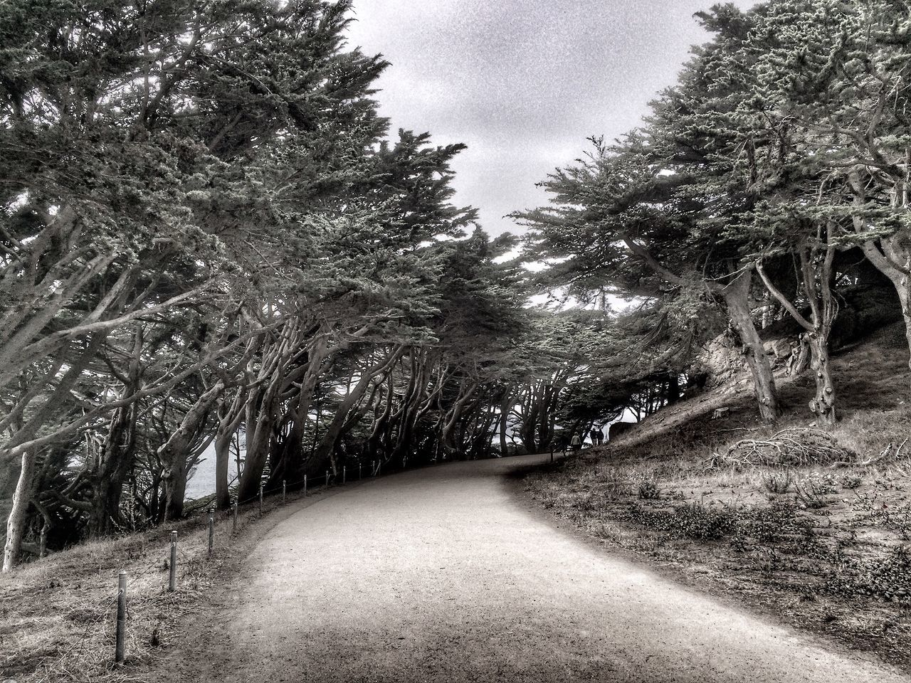 San Francisco Travel Photography Travel Tree Beauty In Nature Traveling