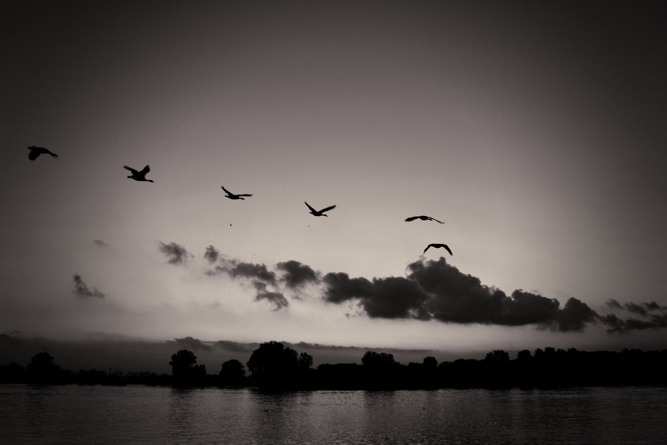 There is beauty along the horizon... #birds #migrating #nature_collection #EyeEmNaturelover #nature Animal Themes Animals In The Wild B&w Beauty In Nature Bird Flock Of Birds Flying Scenics Silhouette Spread Wings Tranquil Scene Waterfront