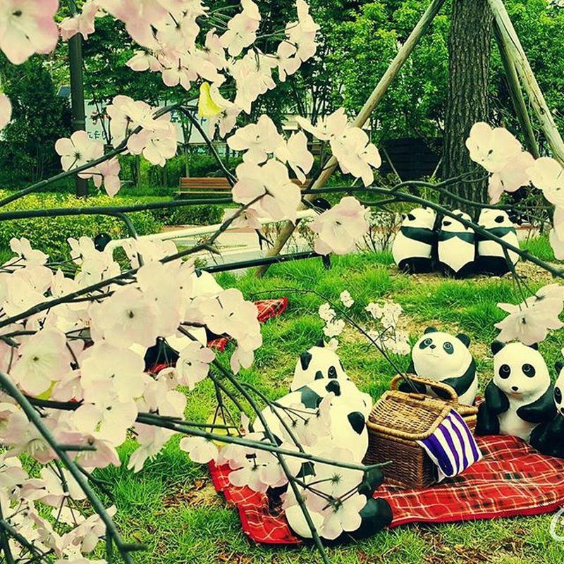 벚꽃놀이 판다 도시락