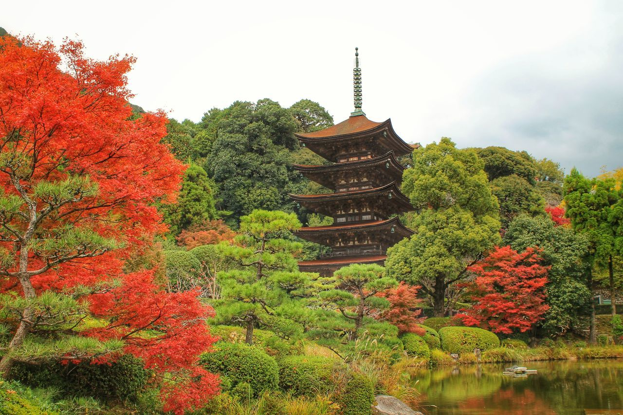 Autumn Buddhism Change Cultures Day Fall Five-storied Pagoda Formal Garden Garden Growing Japan Japanese Garden Maple No People Outdoors Pagoda Pond Red Leaves Relaxing Moments Temple Tree Wooden Pagoda Yamaguchi, Japan