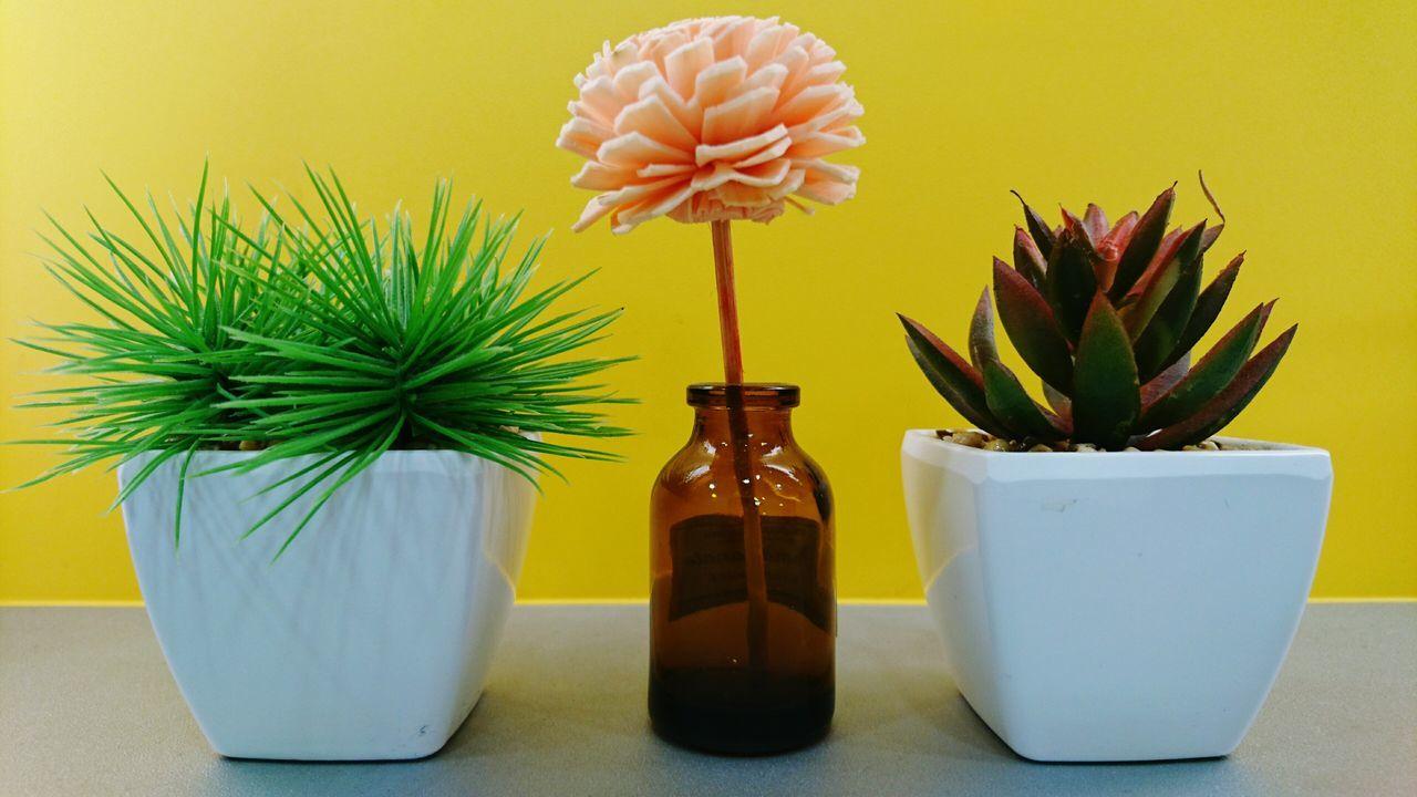 Plant Flower Bottle Beauty Nature Purity No People Flower Head Gerbera Daisy