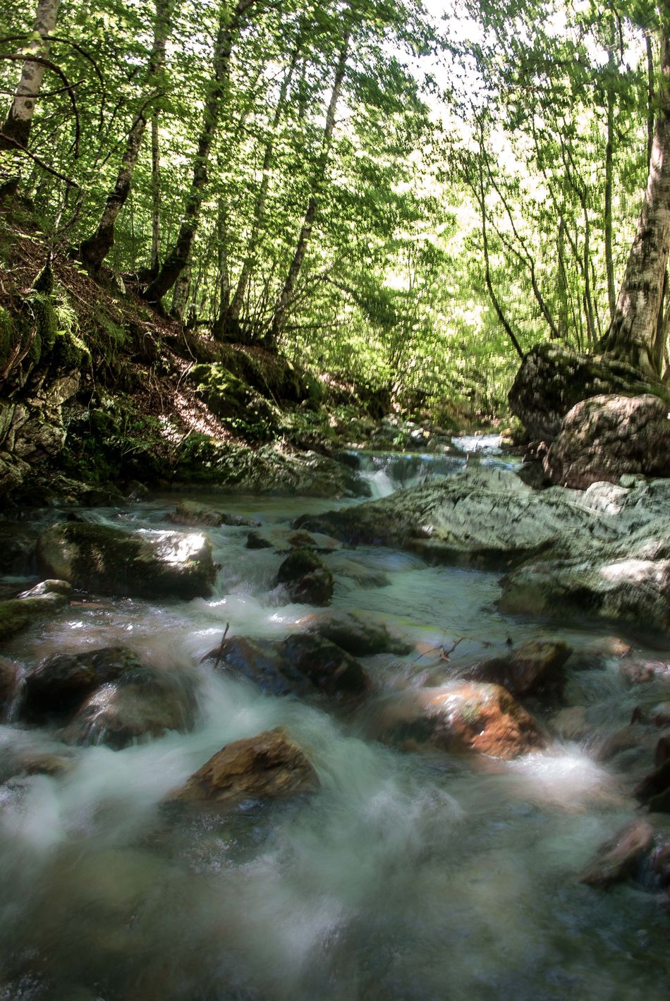 Beautiful stock photos of river, Blurred Motion, Day, Flowing, Forest