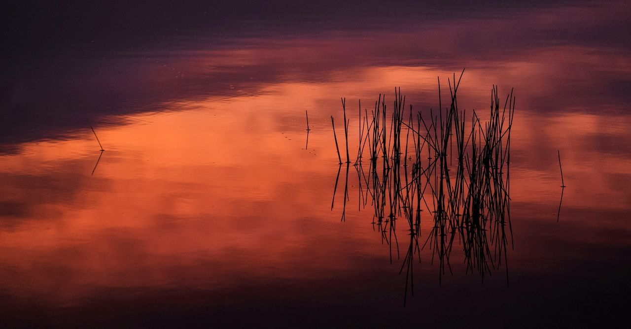 First Light on the Pond Nature Beauty In Nature Water No People Outdoors Landscape Nature Fine Art Photography FUJIFILM X-T1 Fuji X-T1 Sunrise - Dawn Sunrise Colors Sunrise Photography Pink Orange Color Colourful Nature Colourful Life And Day South Africa