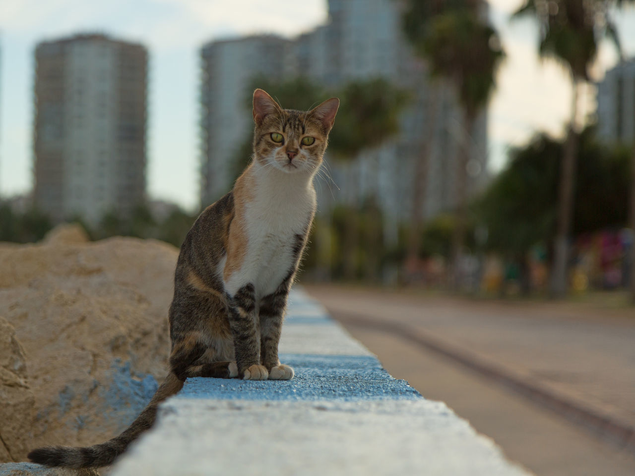 Street Cats Animal Themes Boulder Cats Coastline Day Domestic Animals Domestic Cat Feline Feline Portraits Mammal Mersin Turkey No People One Animal Outdoors Pets Portrait Retaining Wall Rock Formation Sky Street Cats Tabby Cat Tree