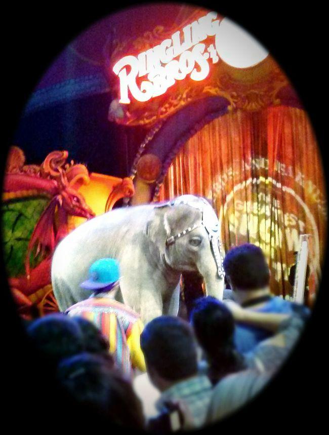 Circus Elephant Ringling Bros Ringlingbrothers
