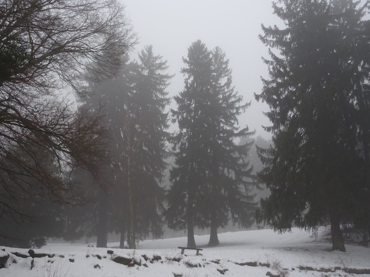 snow, winter, cold temperature, tree, nature, weather, beauty in nature, tranquility, tranquil scene, cold, scenics, no people, landscape, outdoors, day, snowing, bare tree, sky