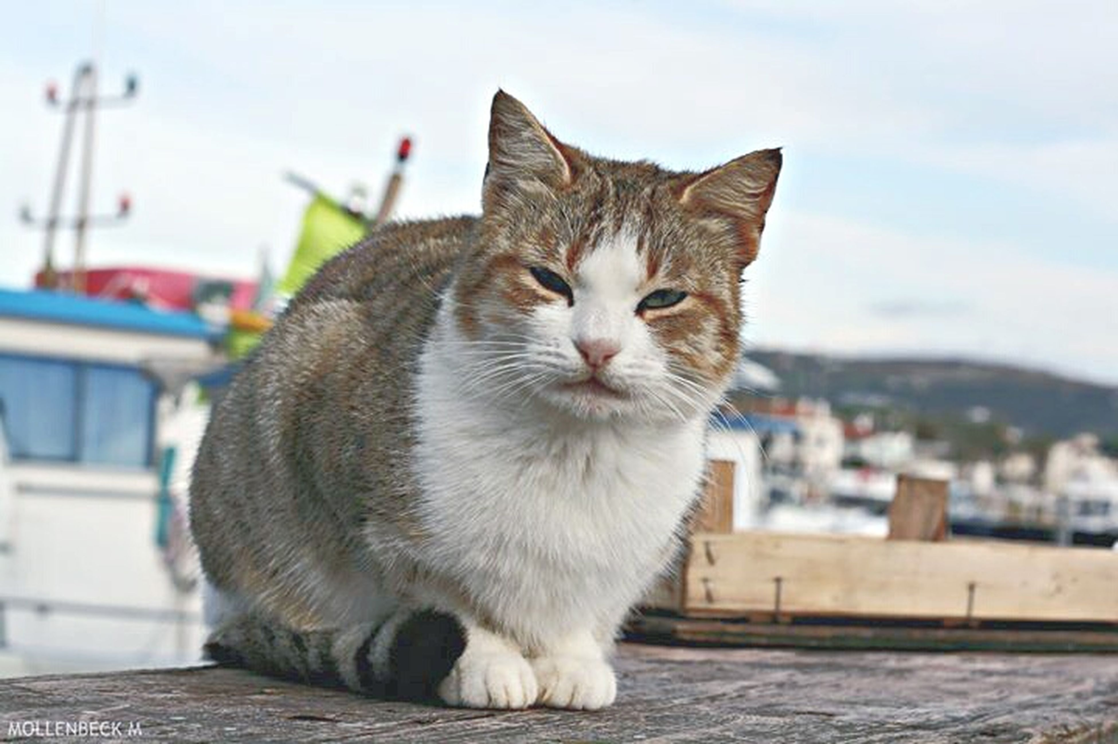 domestic cat, domestic animals, pets, cat, one animal, animal themes, mammal, feline, whisker, focus on foreground, sky, sitting, portrait, looking at camera, building exterior, built structure, relaxation, close-up, street