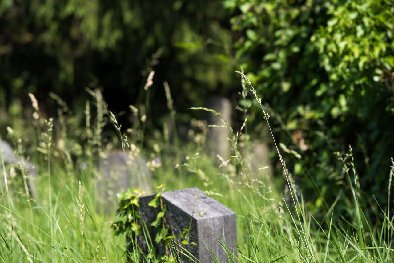 grass, no people, growth, nature, outdoors, day, plant, close-up