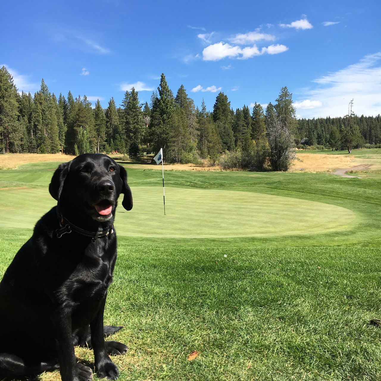 Tee time Golfing Tahoe Titleist Golf Course Tee Time Dogsofeyeem