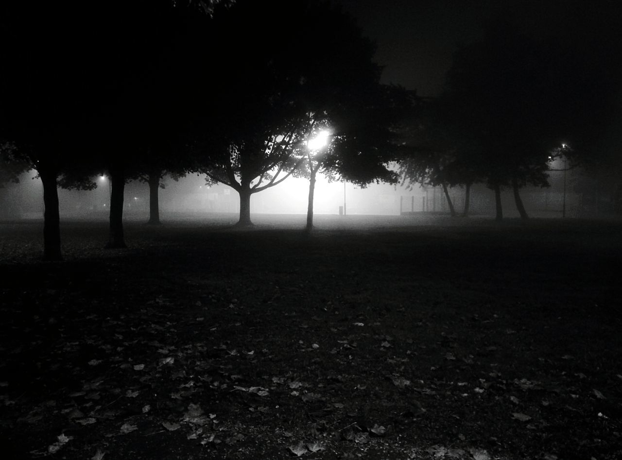 tree, nature, beauty in nature, tranquil scene, landscape, tranquility, branch, tree trunk, field, night, scenics, outdoors, fog, growth, no people, sky