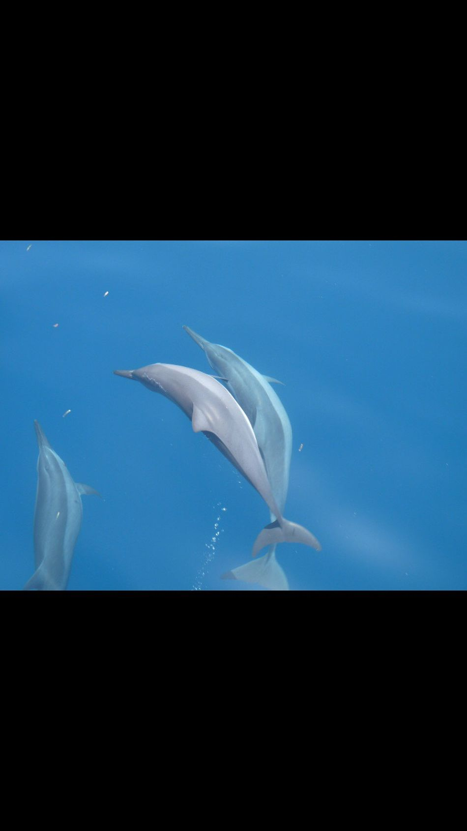Animal Themes Swimming Dolphins Dolphin Safari In Nature