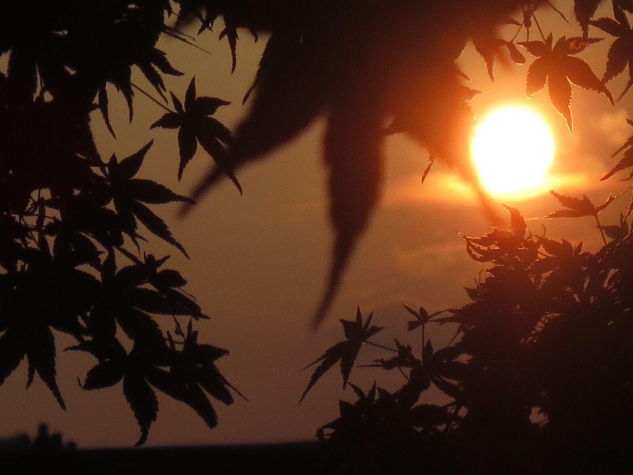 Sunset Skyporn The Purist (no Edit, No Filter) Landscape