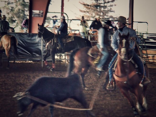 Team roping... By far the most difficult thing I have ever tried to shoot... Animal Animal Head  Animal Themes Black Blurred Motion Depth Of Field Domestic Animals Friendship Full Length Horse Leisure Activity Mammal Men Occupation One Animal Pets Relaxation Rodeo Roping Selective Focus Side View Sitting Togetherness Two Animals
