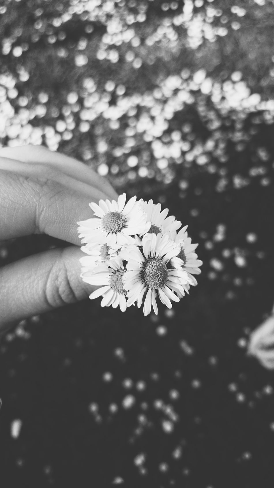 Simple things make life beautiful! 🌞🌼🌺🌸💕 Relaxing Hello World Taking Photos Spring Flowers Daisies Happiness Blackandwhite