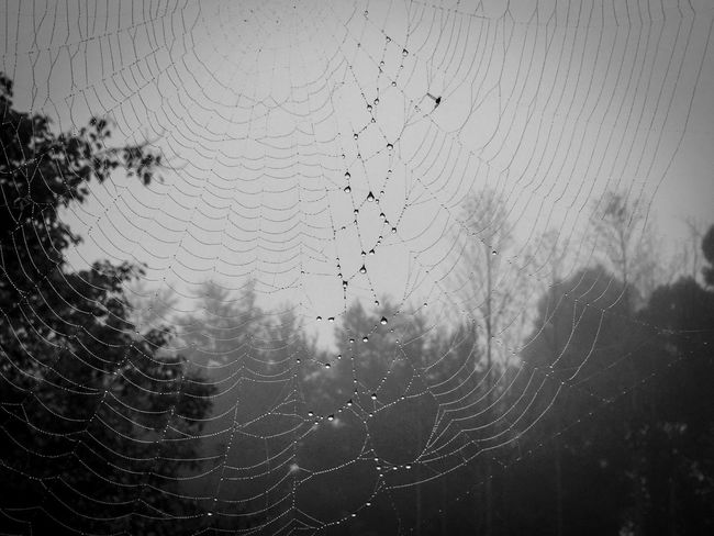 Web The Great Outdoors With Adobe Nature Photography ShotOniPhone6 Tennessee Spiderweb