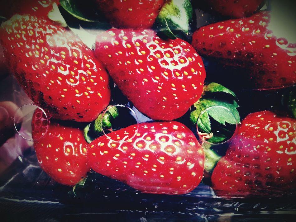 Strawberry Cameron Highlands Malaysia