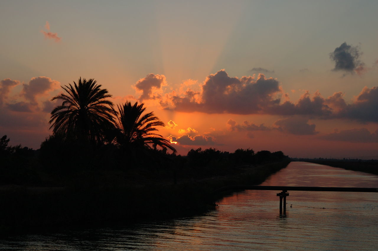 Alexandria Egypt Beauty In Nature Bridge - Man Made Structure Landscape Nature Night No People Outdoors Palm Tree Scenics Sea Sky Sunrise Sunset Tree Vacations Water