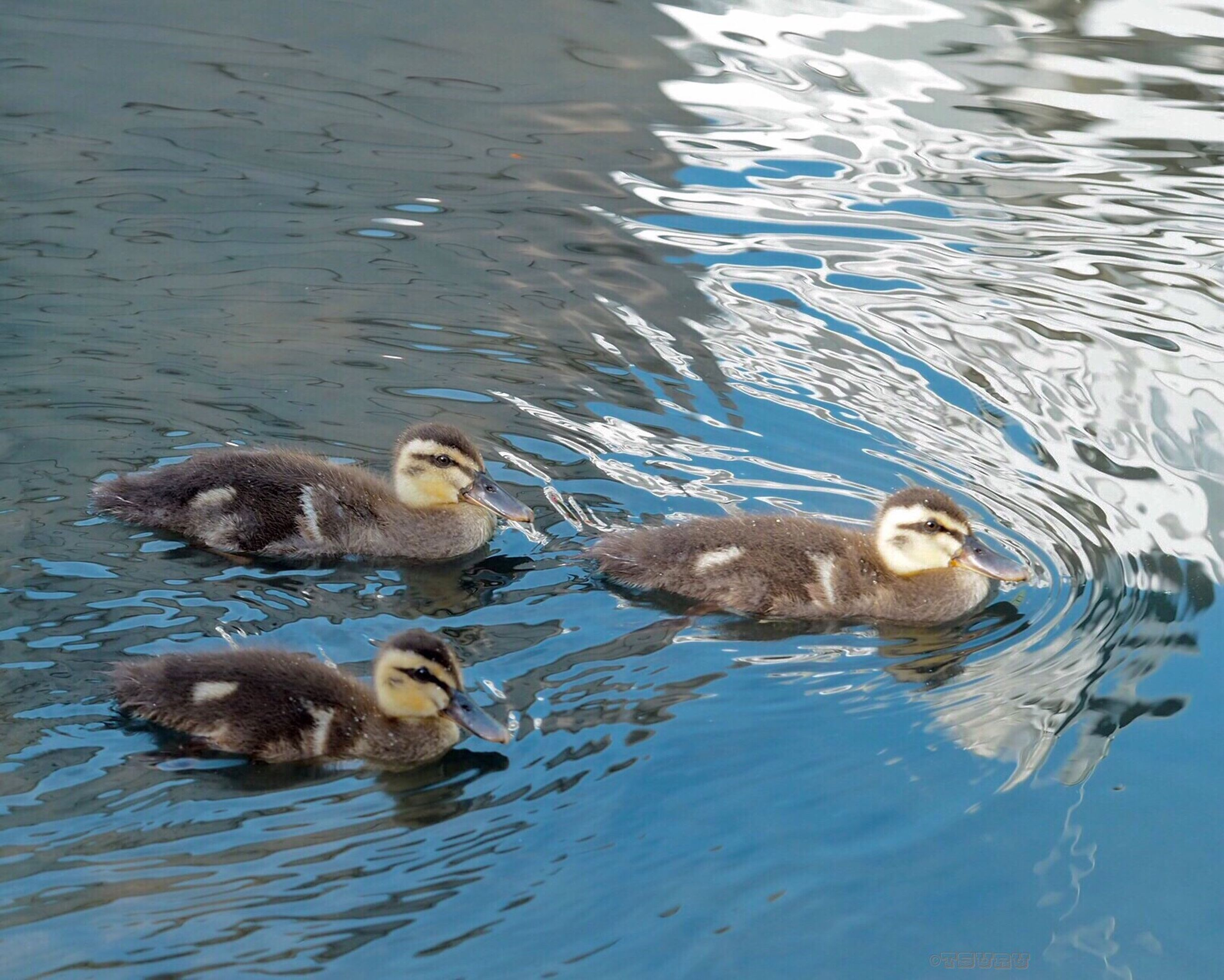 animal themes, water, pets, mammal, animal family, young animal, rippled, animal, no people, nature, outdoors, day, resting
