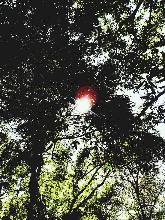 Trees, sunlight, shadows and shades.