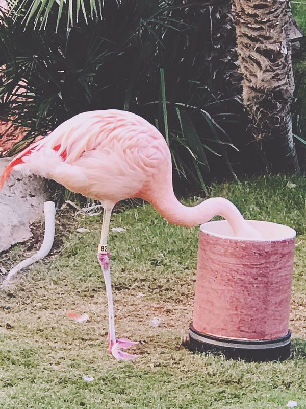 Enjoy The New Normal Flamingo Gardens Grass Pink Color Animal Themes Flamingo Animals In The Wild Bird No People Beak One Animal Outdoors Nature Day