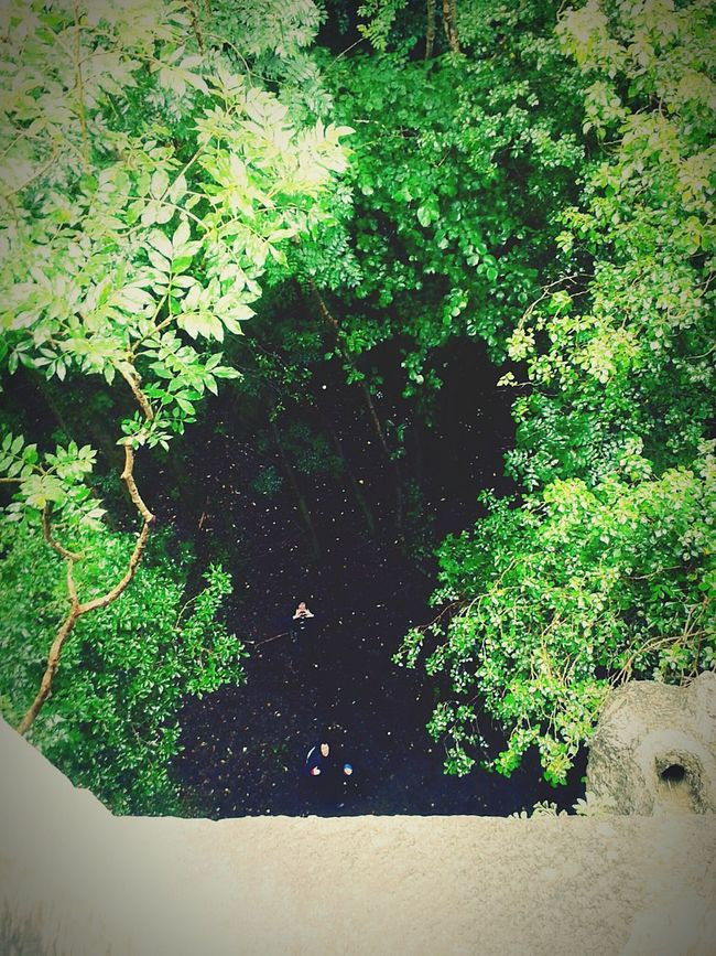 Tree tops from the tower... Nature Green Trees Cong Ireland🍀 Outdoors Live For The Story