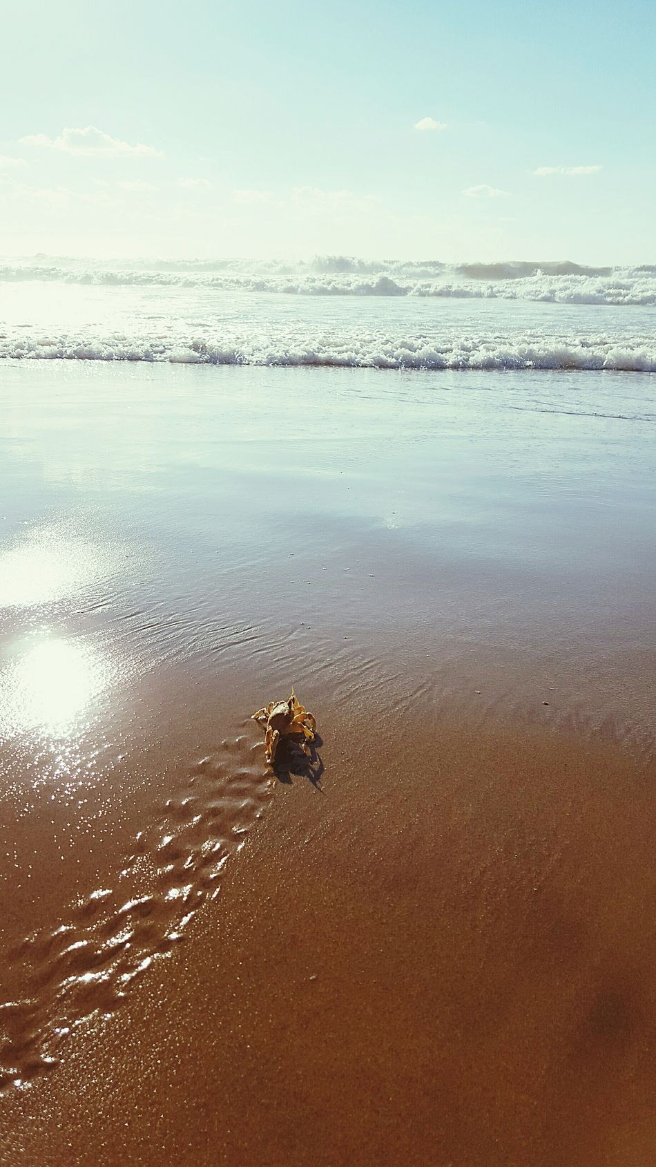 Showcase: January January2016 Mediterranean  Sand Sea Sun Waves Crab Kámoš Nature The Week Of Eyeem EyeEm Best Shots The Great Outdoors - 2016 EyeEm Awards The Great Outdoors With Adobe Miles Away