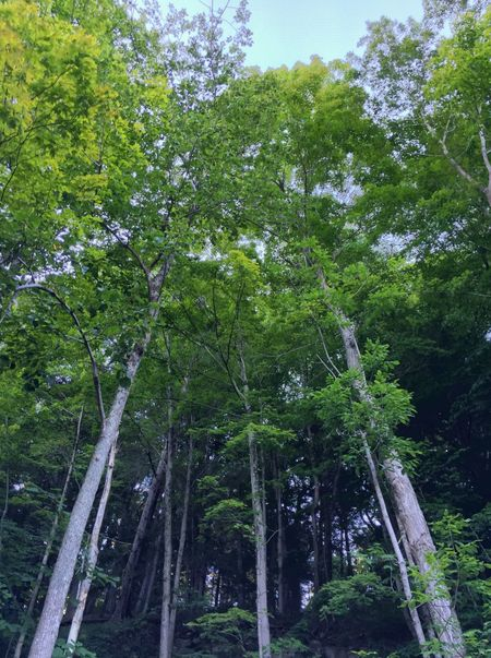 Berkshires, Massachusetts Forest Low Angle View Nature Tree